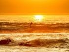 Surfivor 2013